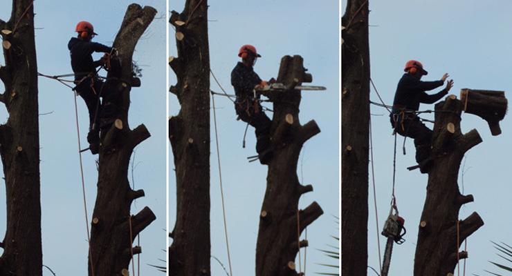 treedemolition