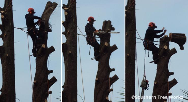 treedemolitioncopyright